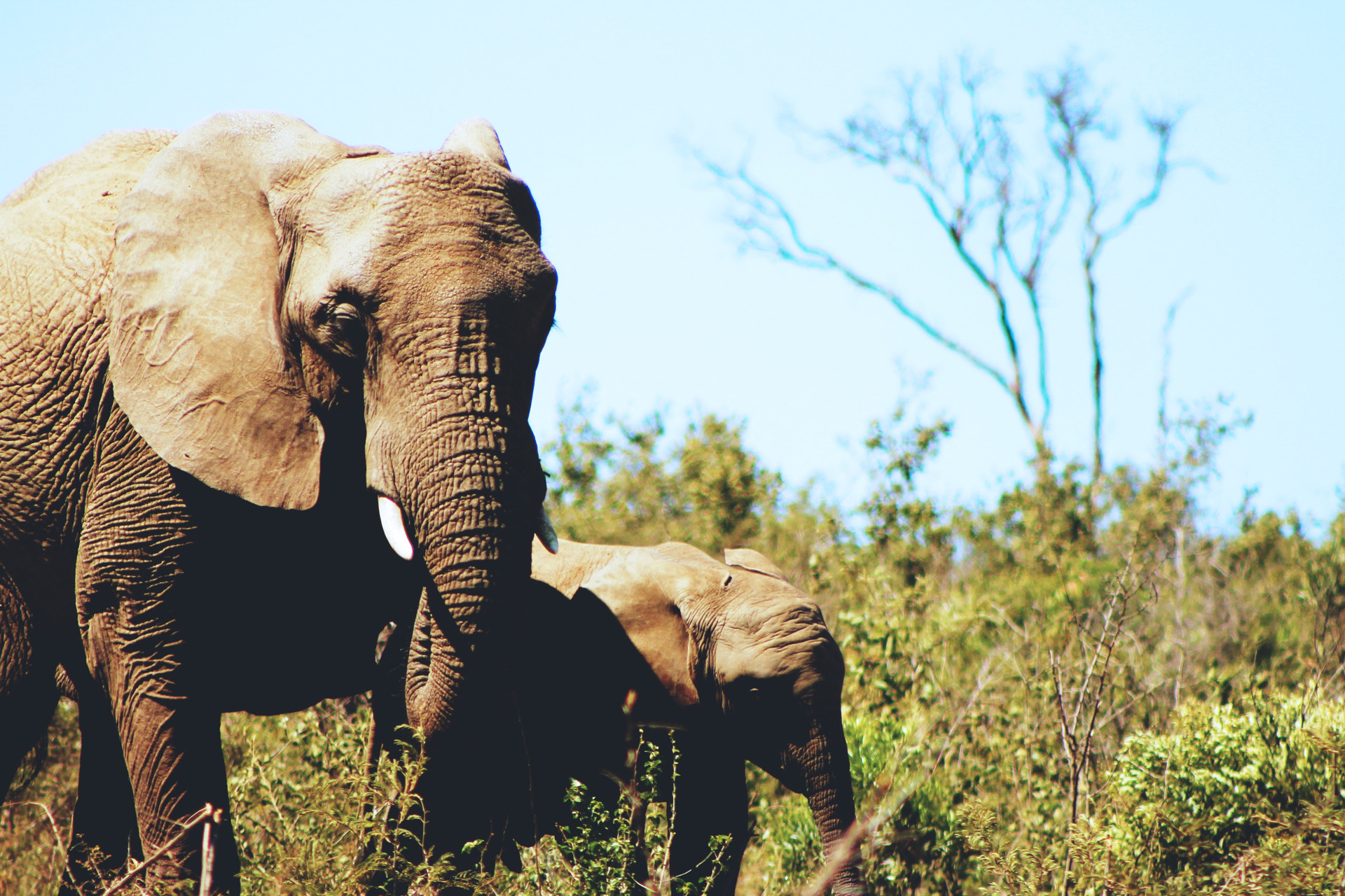 Saving Elephants in Afrika Fund Raising